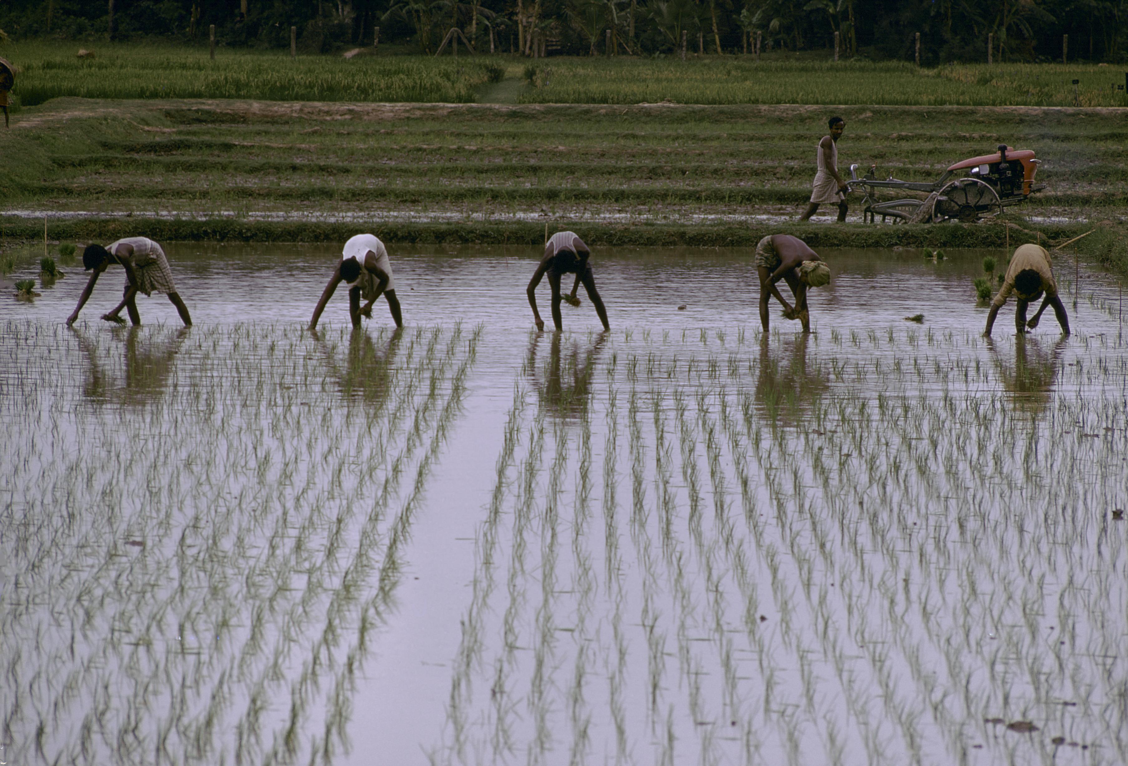 Le fonctionnement du marché de travail dans les zones rurales en Tanzanie